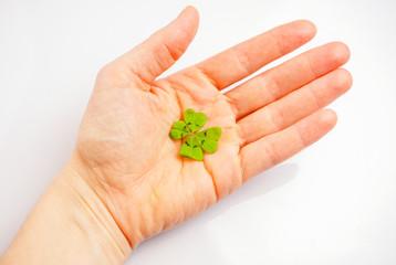 vierblättriges Kleeblatt auf Hand