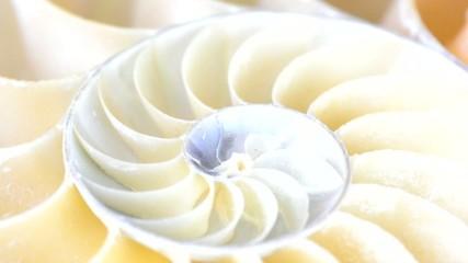 Inneres einer Nautilusschnecke in Bewegung, video, HD, 60 fps
