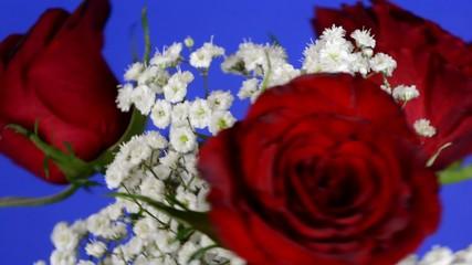 Rotierender Rosenstrauß vor blauem Hintergrund, full HD, 30 fps
