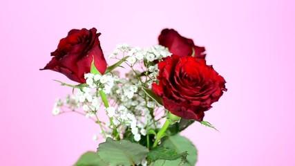 drei Rosen vor rosa Hintergrund, HD, 60 fps