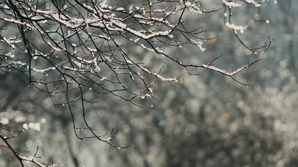 Melting snow. Half speed, taken at 60fps.