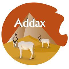 addax_illustration_desert