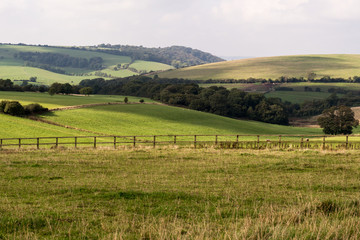 South Downs fields