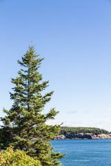 Fir Tree on Blue Water