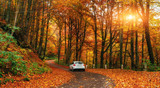 car on a forest path poster