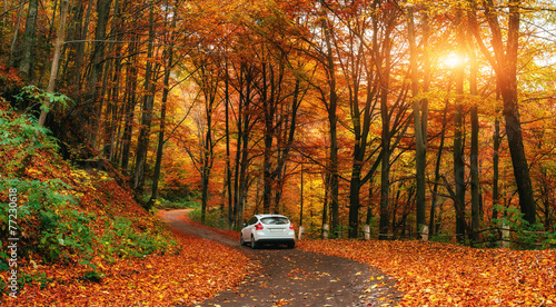 car on a forest path - 77230618
