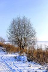 Lonely tree on the bank of the lake