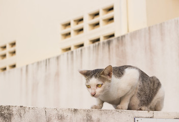 wild cat sitting on the wall ready to move