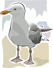 sketchy seagull