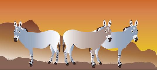 wild ass herd illustration