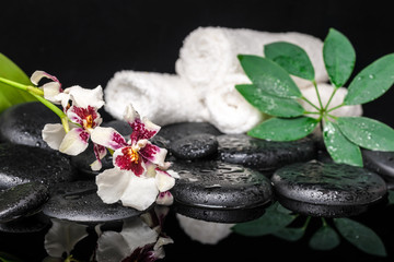 spa concept of orchid Cambria flower, green leaf shefler with dr