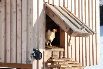 Hühnerstall mit Hühnerleiter