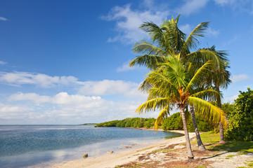 Palm trees, ocean and blue sky on a tropical beach