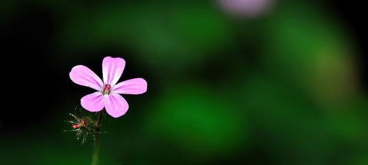 Fleur sauvvage mauve sur fond flou