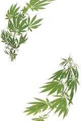 Hemp (cannabis) frame