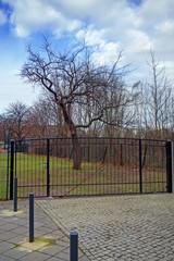 kahler Baum hinterm Zaun
