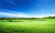 "Постер, картина, фотообои ""field of grass and perfect sky"""