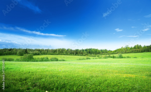 field of grass and perfect sky - 77255451