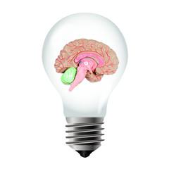 Gluehbirne mit Gehirn- Light bulb with brain