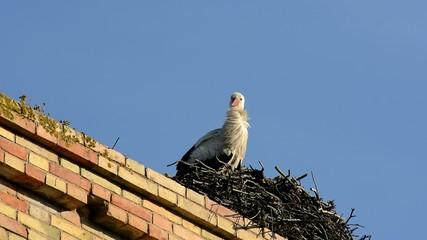 Storks in a nest, Jerez de la Frontera, Spain