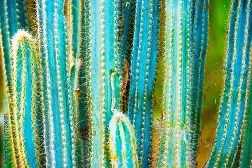In de dag Cactus Cactus Specie