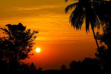 trees silhouette on beautiful sunrise background