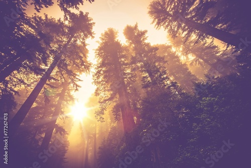 canvas print picture Misty Forest Trail