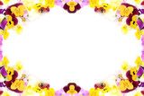 frame of the pansy