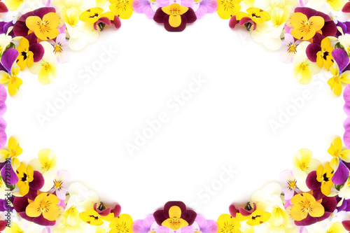 Tuinposter Pansies frame of the pansy