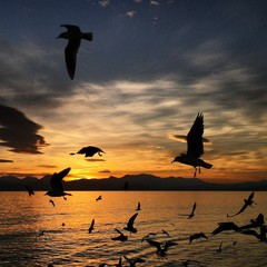 birds flying at sunset above the sea