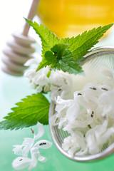 White Dead-nettle -  Lamium album - tea lotion