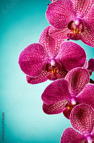 Fotobehang Orchidee Orchid flowers