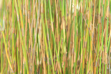 Natural background from sedge tree