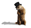 Groundhog - 77289028