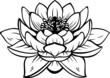 Lotus (nelumbo) flower. Vector tattoo illustration - 77289614