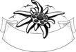 Edelweiss flower, the symbol of alpinism, with mountain. Logo. - 77289624