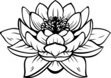 Lotus (nelumbo) flower. Vector tattoo illustration