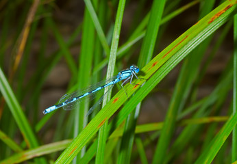 Small dragonfly 5