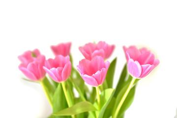Frühling Tulpen Blumen Blüten Blumenstrauß