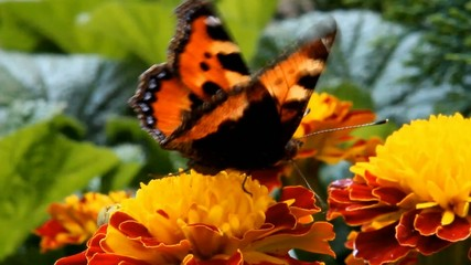butterfly flying over the flowers in the garden