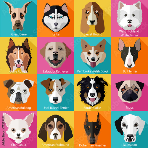 Obraz Set of flat popular breeds of dogs icons.