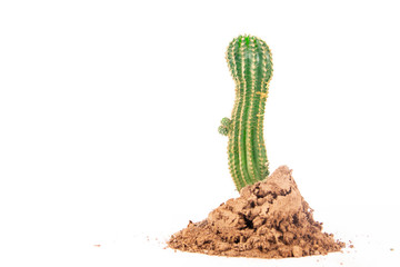 Cactus in the sand at full length