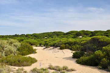 Punta Umbria - Costa de la Luz - dunes