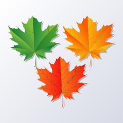 Fall Leaf.