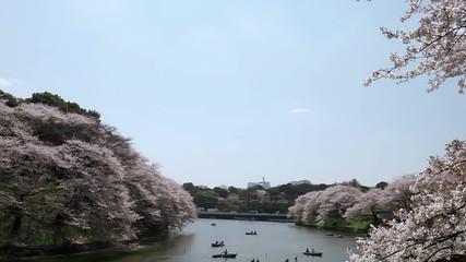 桜並木と千鳥ヶ淵
