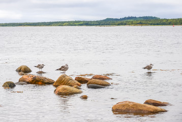 Three seagulls sitting on marine rocks.