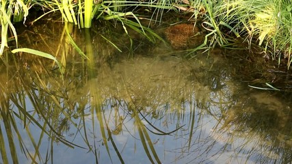 pond with dragonflies morning