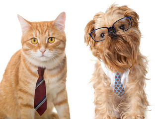 Cat and dog in glasses