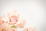 Fototapeta Peach rose cluster  with vignette