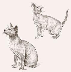 sphynx cat sketches